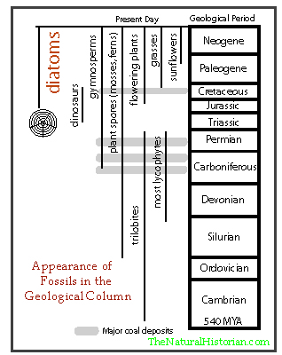 checkpoint fossils and the geologic column Sci 245 week 2 checkpoint fossils and the geologic column for more course tutorials visit wwwsci245com checkpoint: fossils and the geologic column.