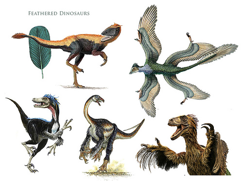 the purpose of feathers in non avian dinosaurs A flash of color: discovering dinosaur pigments when the first feathered non-avian dinosaur paleontologists had debated about the original purpose of feathers.