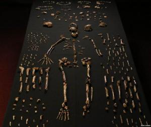 Some of the bones from the cave in South Africa. Image by John Hawks who is one of the co-authors of the paper describing these bones.