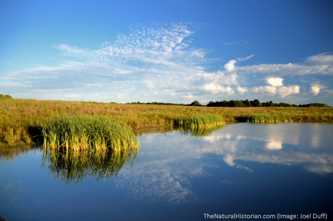 Sunrise-Springfield-bog-lake