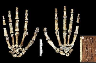 Hand-of-a-Homo-Naledi