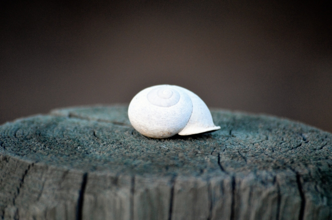 Snail shell in San Diego CA. Photo: Joel Duff
