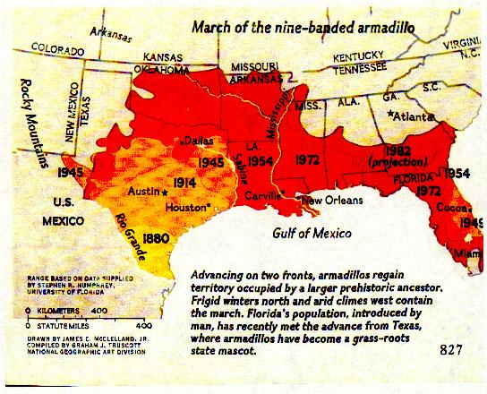 Map of the expansion of the nine-banded armadillo through the 1980s. These animals have been migrating as much as 100 miles per decade.