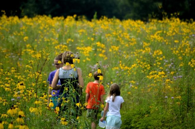 Springfield-bog-flowers-asteraceae-1600px