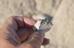 A portion of a jawbone I picked up off a hillside in the badlands of South Dakota. Photo: Joel Duff