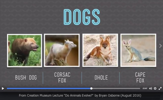 AiG-Osborne-dogs-kinds-speciation-2016