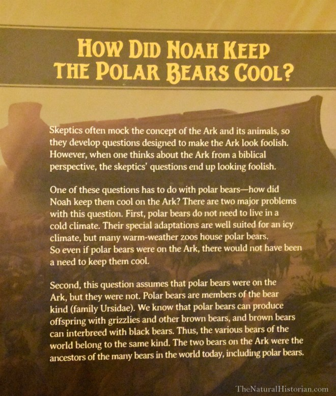 Polar-bears-on-ark-encounter