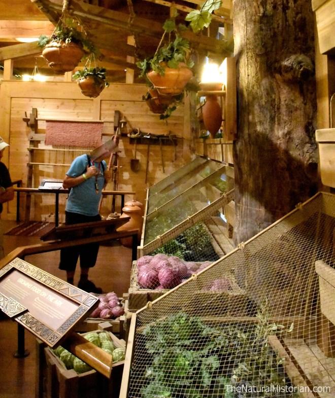 Ark-encounter-domesticated-crops