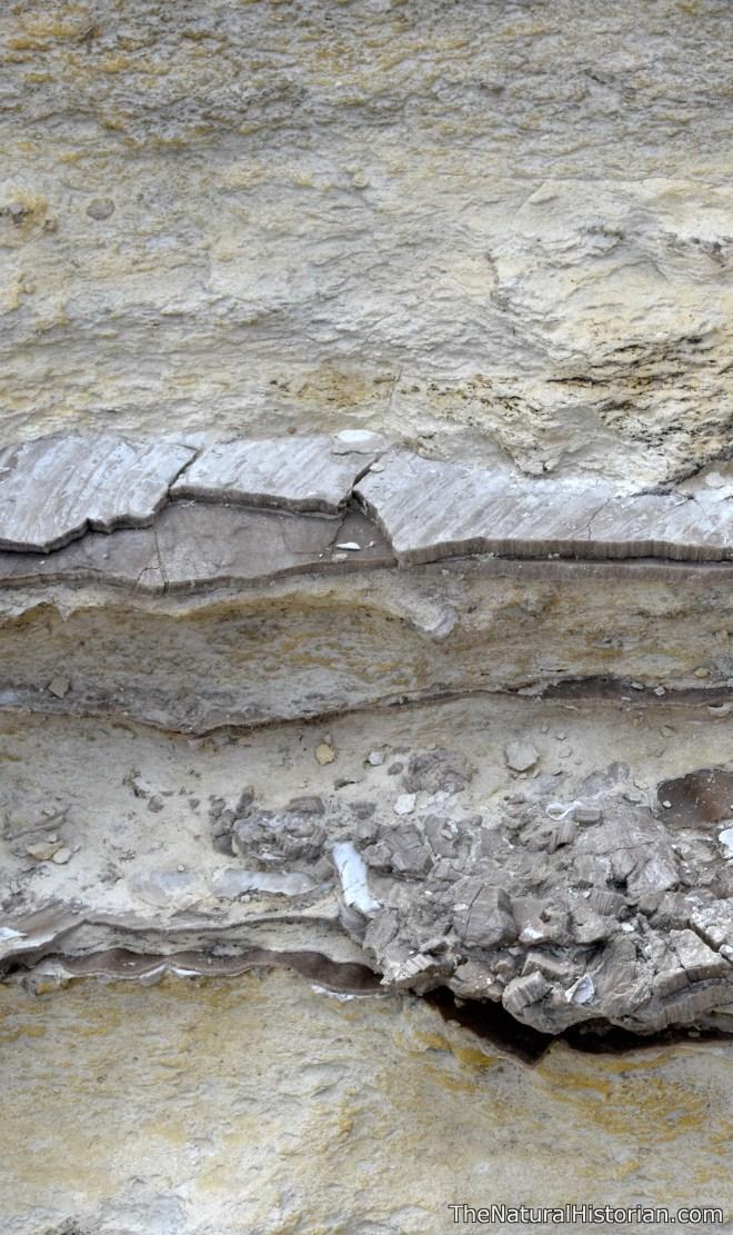 cross-section-monumentrocks-kansas-clamshells
