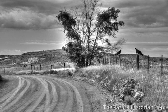 kansas-buzzards-monochrome-beechnut-photos-rjduff