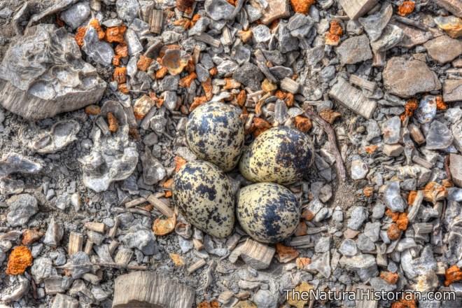 kansas-eggs-monument-rocks-beechnut-photos-rjduff