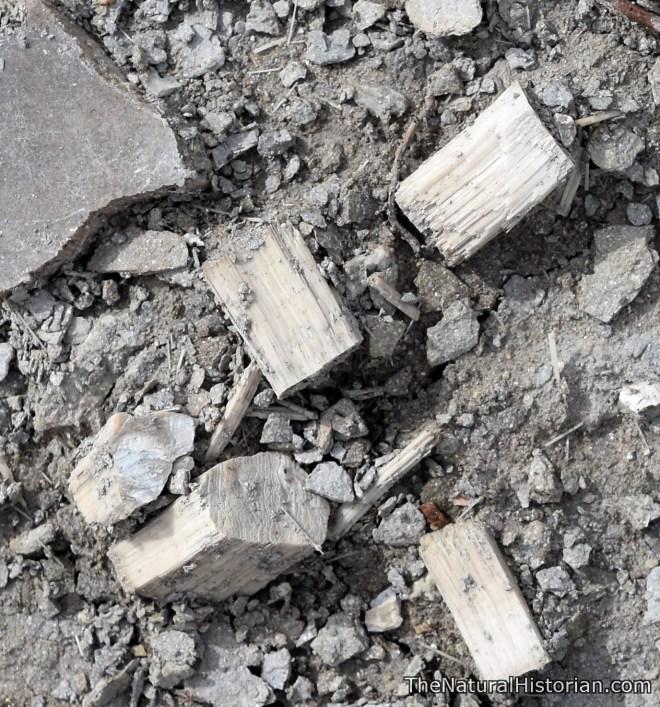 kansas-monumentrocks-giantclamshellfragmentscloseup