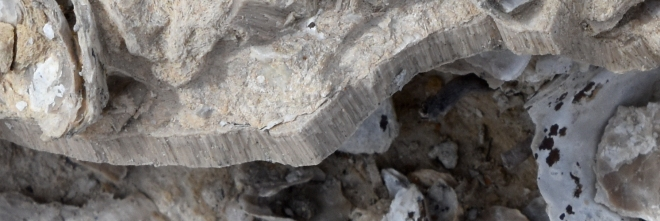 monument-rocks-fibrous-clamshell-fossil-kansas