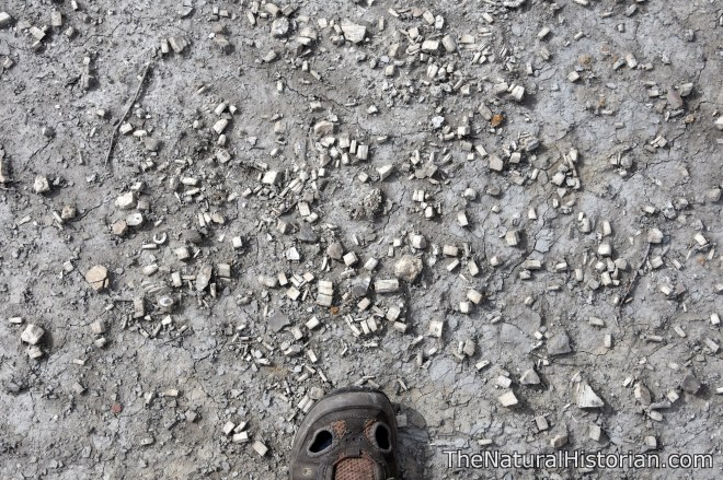 monument-rocks-kansas-giantclamfragments