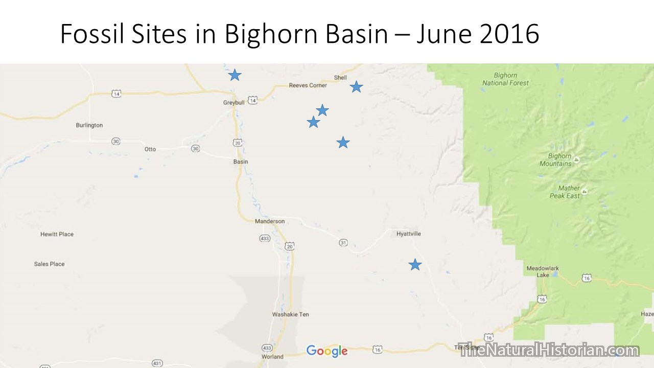 Fossil Collections Bighornbasin2016 Wyoming