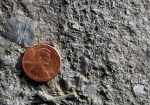 ordovician-fossils-ark-encounter-kentucky2