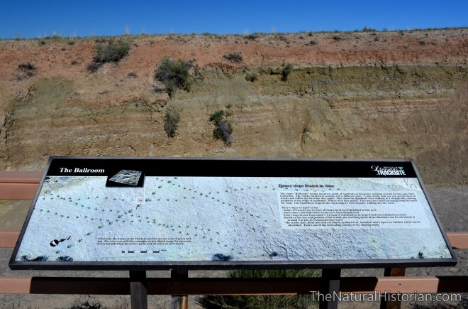 red-gulch-dinosaur-trackway-interpretive-sign2