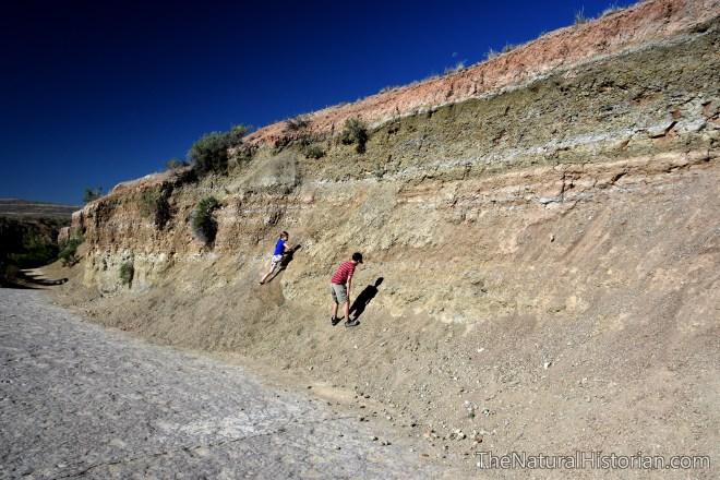 redgulch-dinosaur-trackway-huntingforfossils