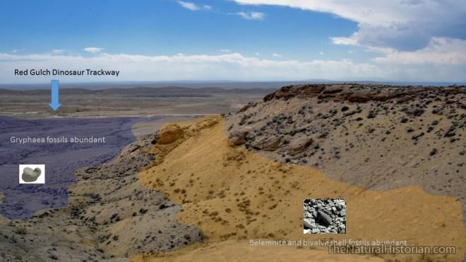 redgulch-fossilsites-bighornbasinwyoming