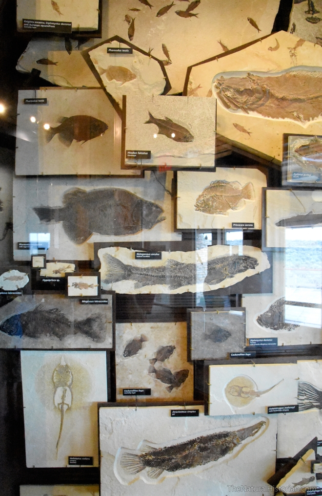 fossil-butte-visitor-center-fish-diversity