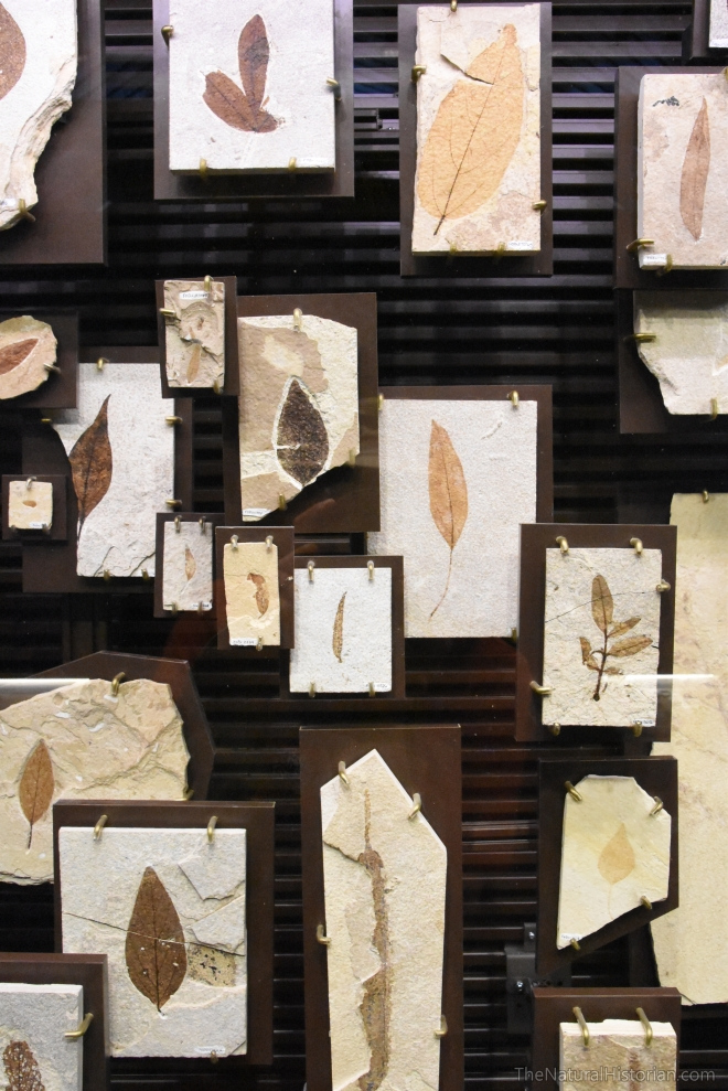 fossil-butte-visitor-center-leafdiversity