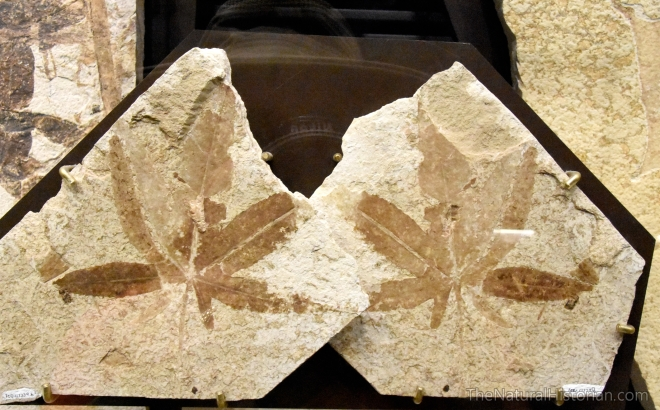 fossil-butte-visitor-center-leaves