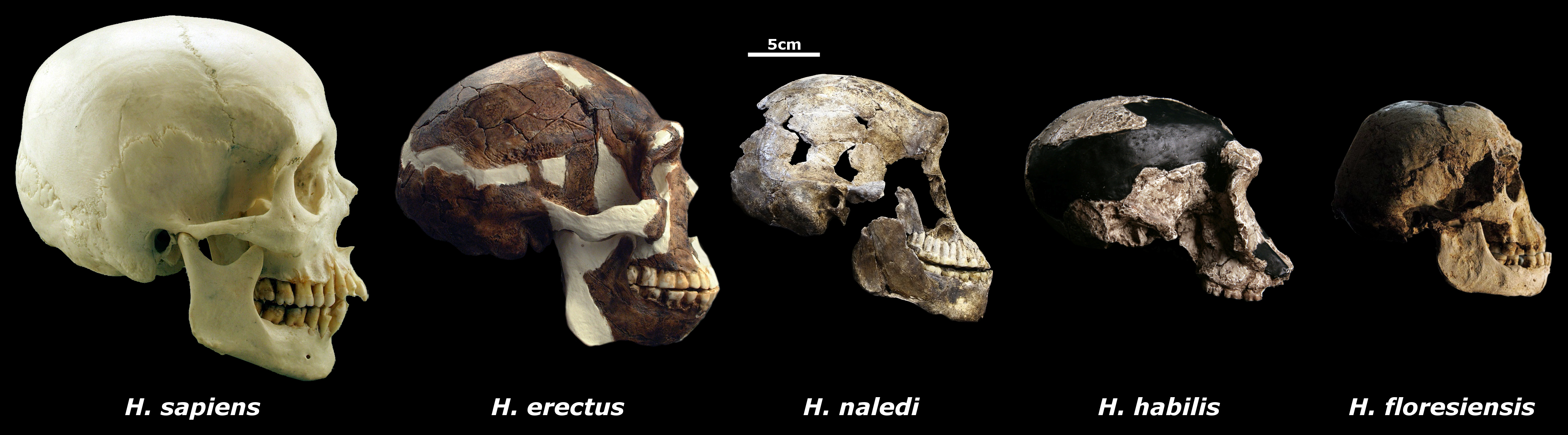 Radiometric dating human fossils found