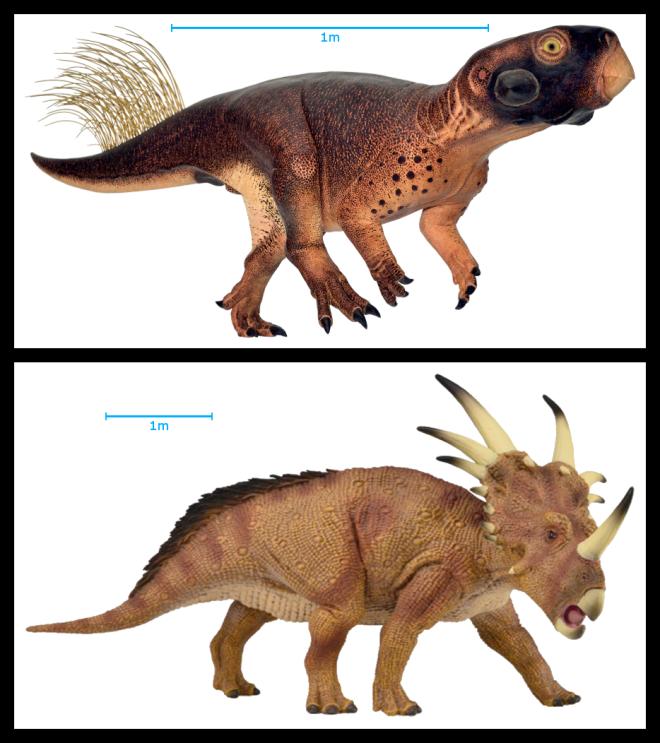 Psittacosaurus and Styracosaurus
