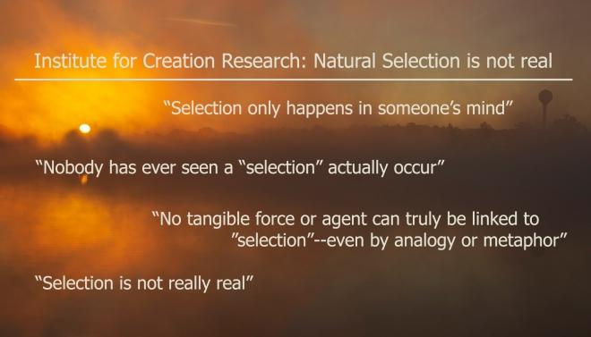 ICR-natural-selection-not-real-guliuzza1